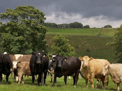 Scottish government identifies case of mad cow disease