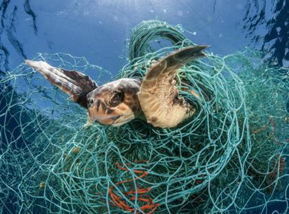 World Animal Protection - Loggerhead turtle trapped in net