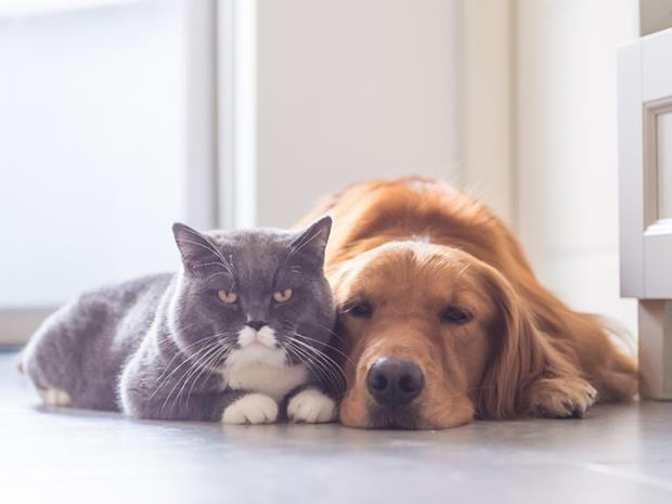 Cat and dog_sleeping with the enemy