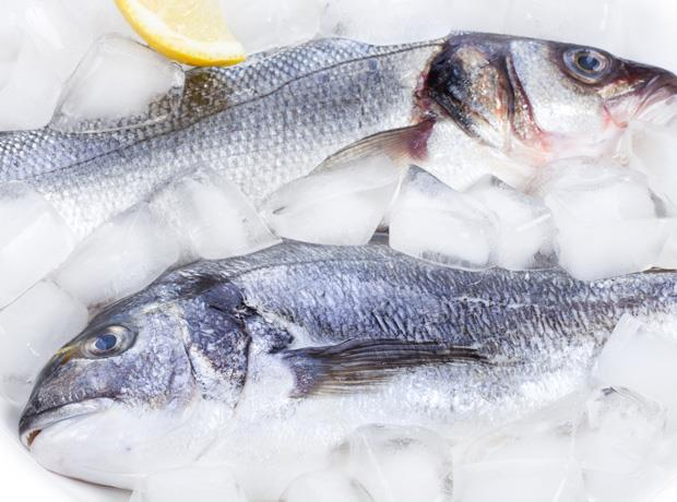 Morrisons grows fish processing capacity in grimsby looks Fish for jobs