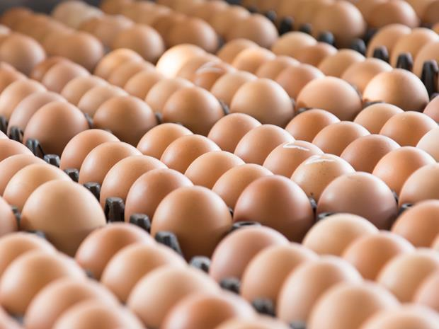 Fipronil egg contamination scandal: what you need to know now