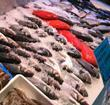 seewoo fresh fish