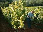 Torres Vineyards Spain