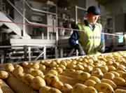 Walkers potato production line for PepsiCo