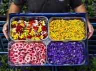 Edible flowers Sainsbury's