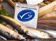 msc certified fish