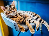 Pampered cat lounging on a chair pets petcare