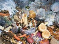 Food waste at an anaerobic digestion plant