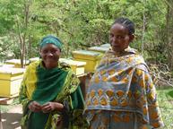 beekeepers farm africa