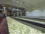 omsco organic mozzarella production