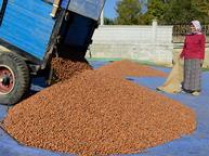 lorry full of nuts, nut prices ease