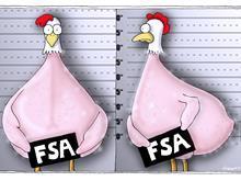 FSA chicken