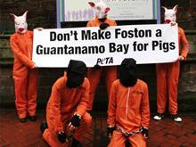 Pig farm protest
