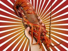 lobster one use