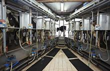 Milking parlour_single use