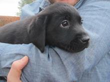 dog grooming pet petcare animal
