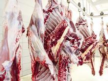 Meat Carcass