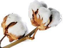 cotton one use