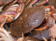 crab crabs