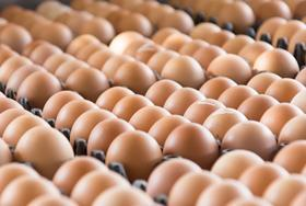 Eggs in crates