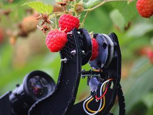 Robot fruit picker Fieldwork