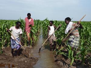 farm africa