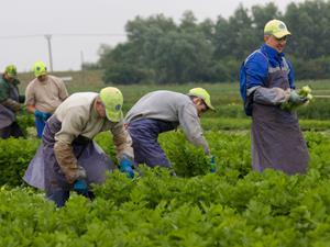 Migrant workers single use