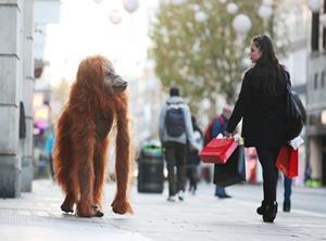 iceland orangutan stunt