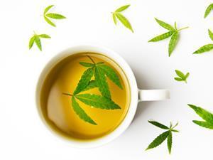 cannabis tea cbd