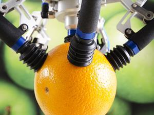 fruit picking robot