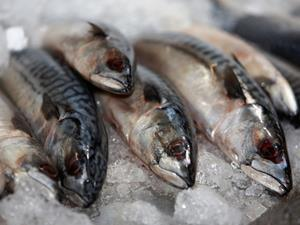One use - mackerel
