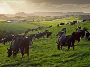 sustainability farming