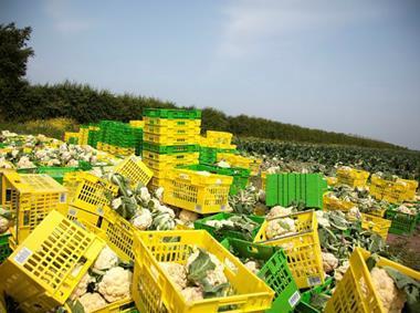 Cauliflower waste