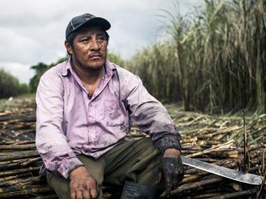 fairtrade sugar cane