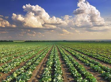 Crops farm farming