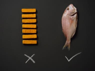 Focus on fish