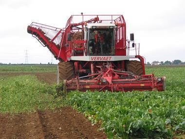 sugar beet sweet combine harvester farm