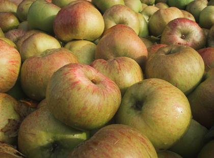 Cox takes a back seat as shoppers favour modern apples