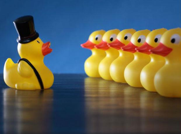 wholesale ducks